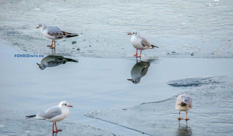 Замрзнато крајбрежјето на Охридското Езеро (фото)