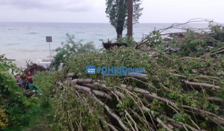 Видео: Откорнати јасиките во Трпејца од невремето кое беснее над Охридскиот регион